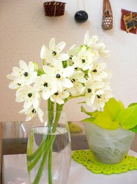 畑の花2.jpg