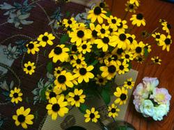 畑の花②.jpg