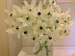 flower21.jpg