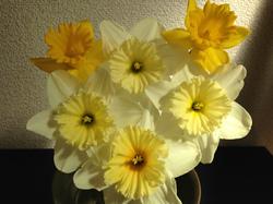 flower31.jpg