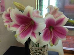 flower47.jpg