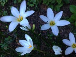 flower52.jpg