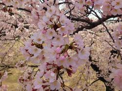 flower65.jpg