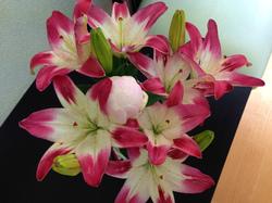 flower69.jpg