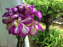 flower70.jpg