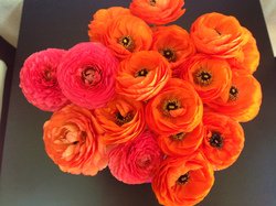 flower74.jpg