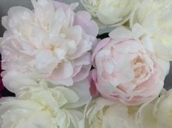 flower86.JPG