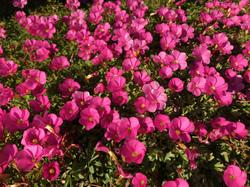 flower98.jpg