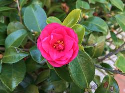 flower99.jpg