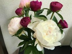 flower102.jpg