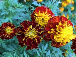 flower111.jpg