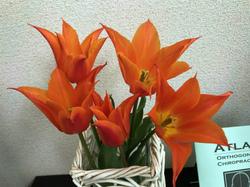 flower112.jpg