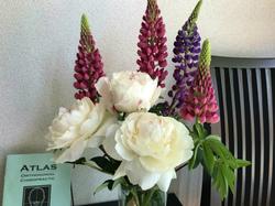 flower123.jpg