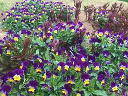 flower126.jpg