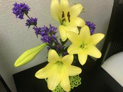 flower129.jpg