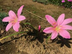 flower131.jpg