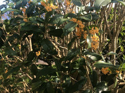 flower133.jpg